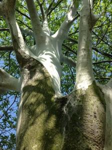 The Shroud of Jesus Gre