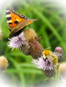 The Bee and The Butterfly