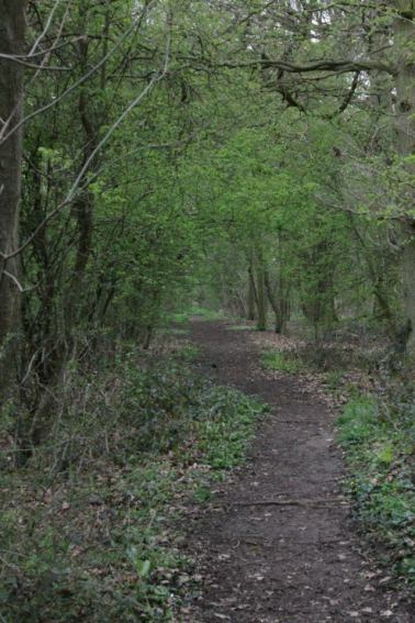 The Bosky Wood
