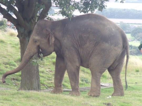 Elephants' Charm